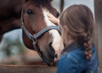 Die Druseerkrankung der Pferde